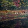 Blackwater Reflections