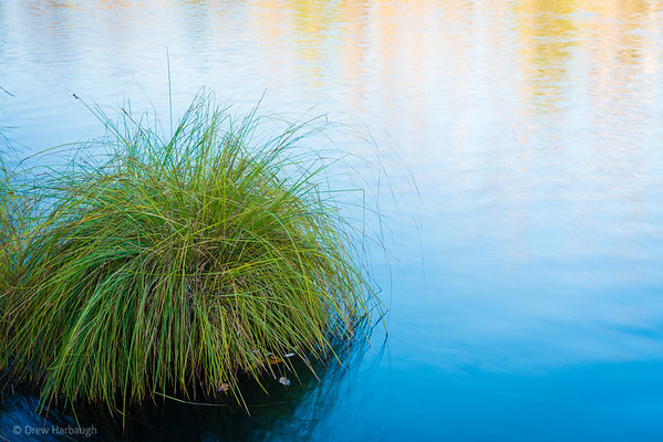 Serenity Grass on the Pond