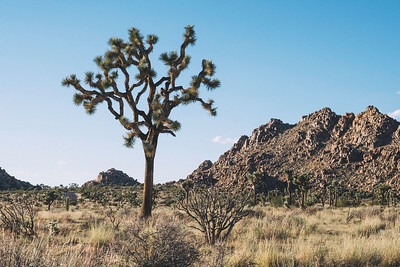 Lightroom Film Presets - Joshua Tree