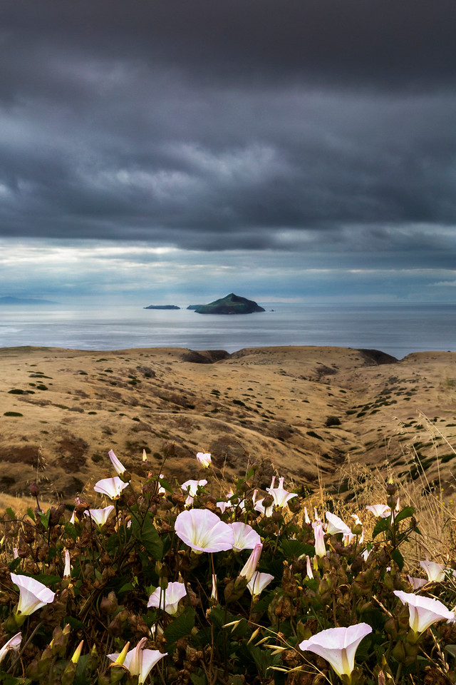 Anacapa Island and Morning Glory's