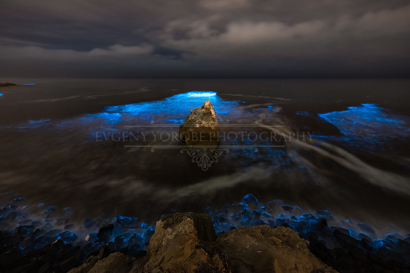 Bioluminescence at Reed Rock in Sunset Cliffs