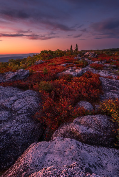 Soft and colorful morning light graces the rocky heath barrens of the Dolly Sods Wilderness.