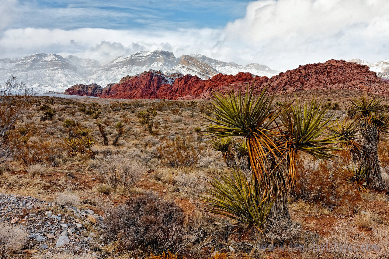 """Made it to Vegas on Thursday night so I could have Friday to wonder around.  I talked Justin and Nick into journeying out to Red Rock Canyon, which is just 20 minutes from Las Vegas.  Yes, that's snow in Nevada.  <a href=""""http://www.redrock.org/"""">http://www.redrock.org/</a>"""