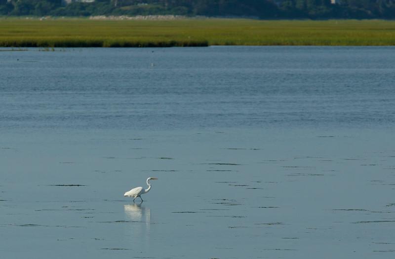 White Water Wader