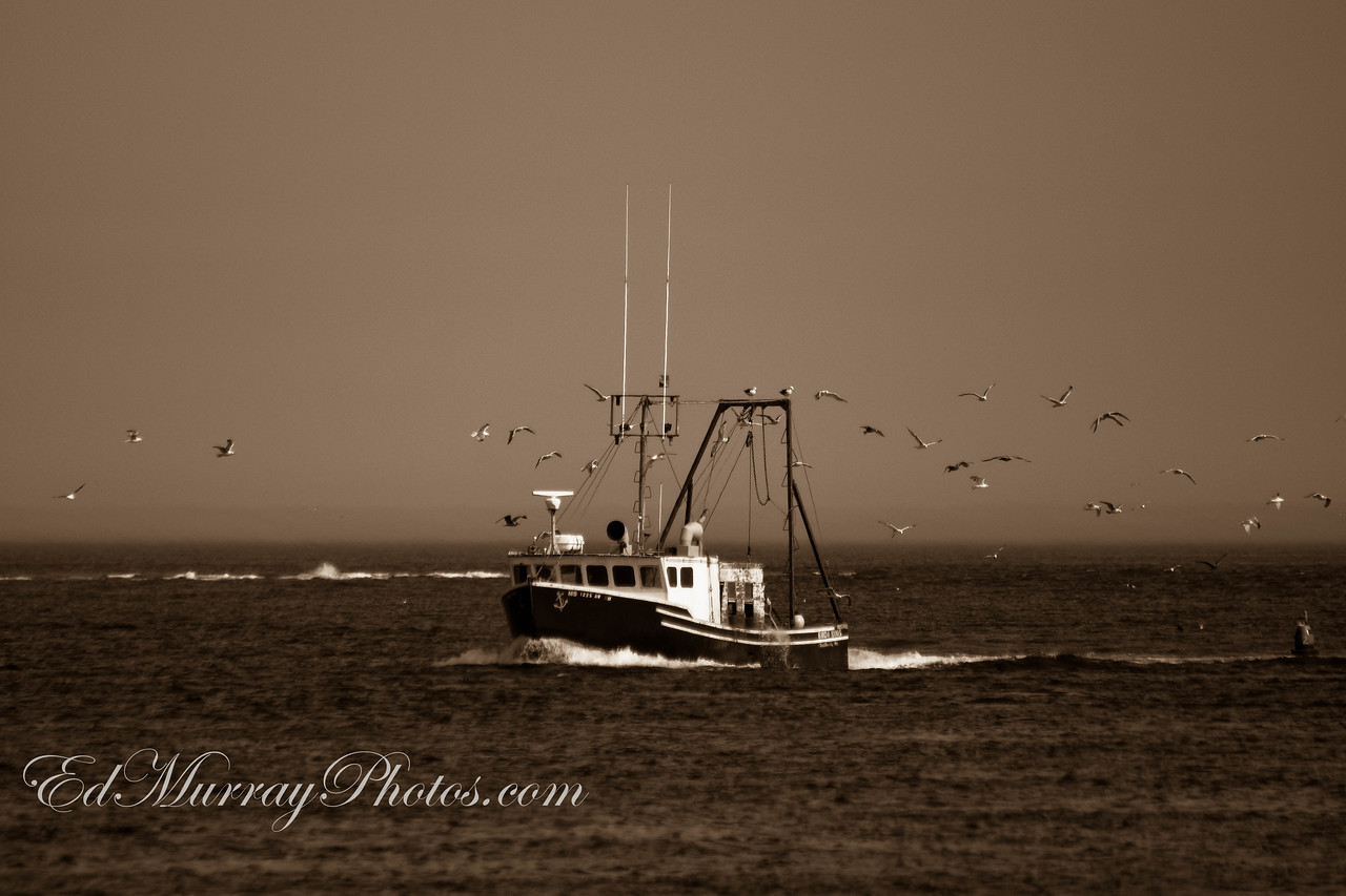 """It's 11:40: This fishing boat called """"Bada Bing"""" came into port everymorning at 11:40. You could set your watch by this boat. I think they had a pretty good catch - based on all the sea gull activity.   Critques welcomed!"""