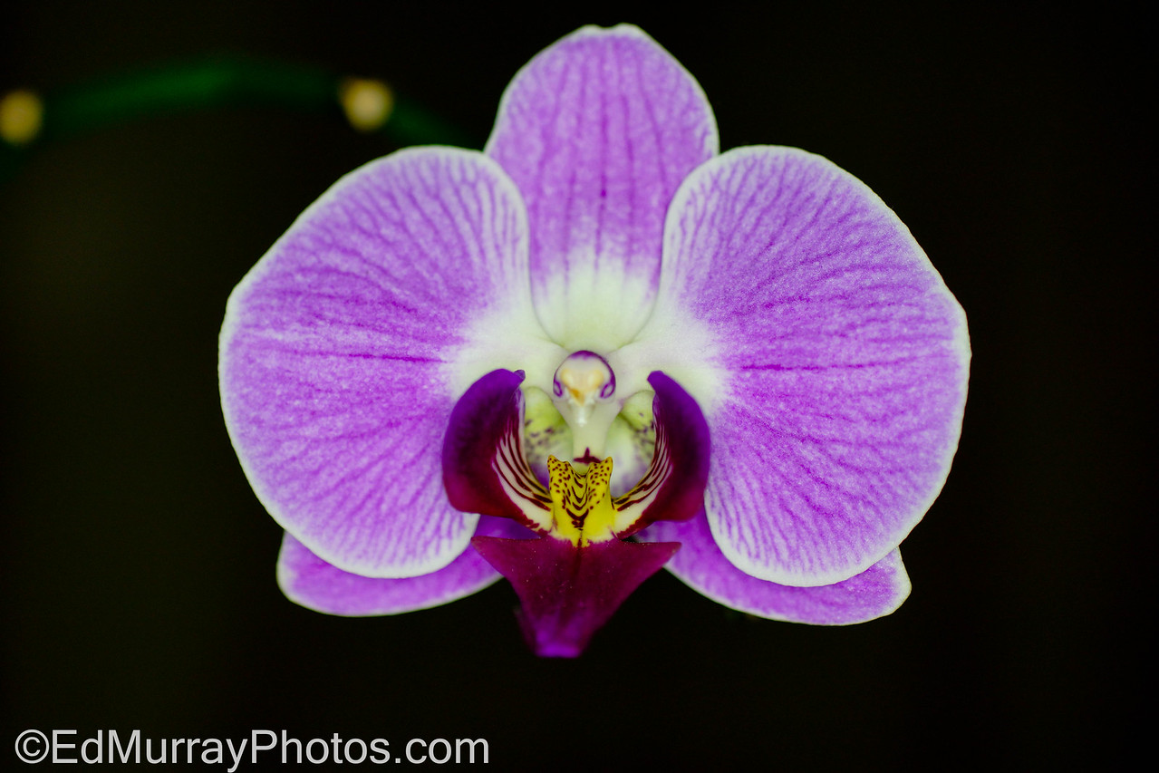 """Floating Flower: Happy Wednesday - Thanks for the feedback on yesterday's """"eyes' shot. I appreciate it!   1/16/2013"""