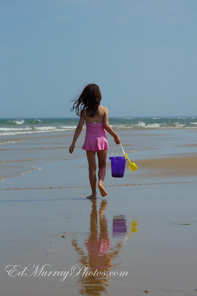 Seaside Shell Search