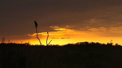 Everglades National Park, Florida, Hawk