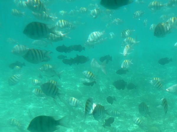 Fish, Grand Bahama