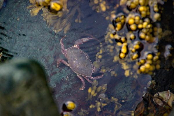 Coachman's Cove, Crab, Newfoundland