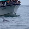 Alaska, Resurrection Bay, Seward, Whale