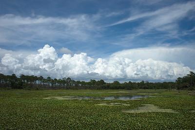 Florida, St Marks NWR