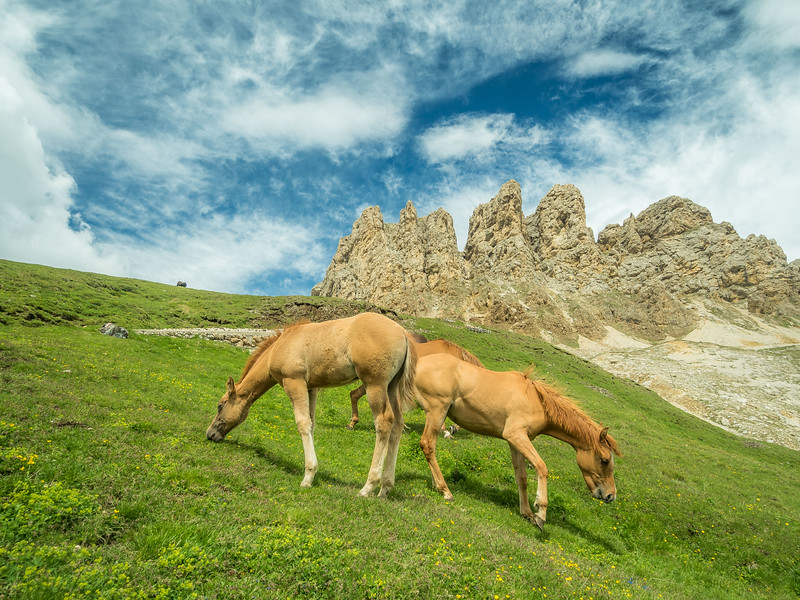 Horses in the Mountain Pastures, South Tyrol, Italy
