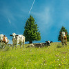 The Cowboy Band, Seiser Alm in South Tyrol, Italy