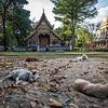 Sleeping Dogs Lie, Wat Chiang Man, Chiang Mai, Thailand