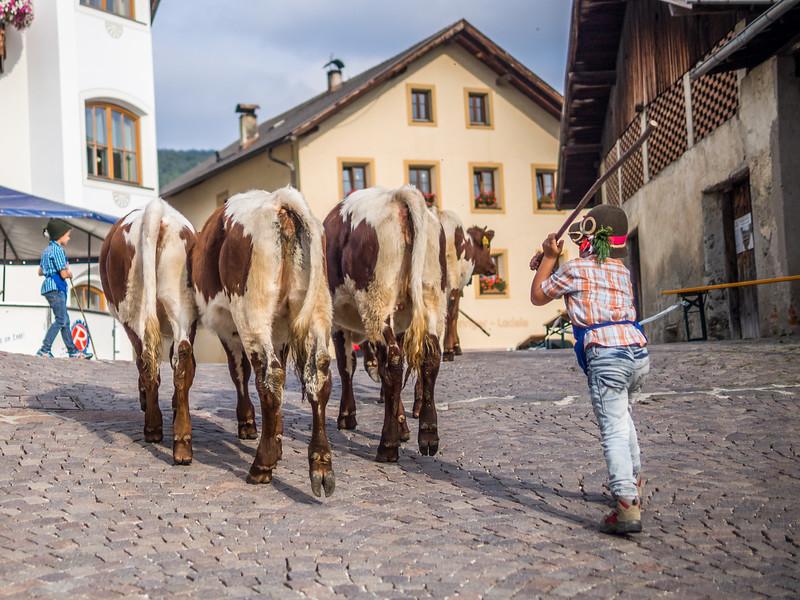 Cow Boy, Lajen, Italy