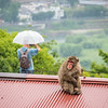Wishing for an Umbrella, Kyoto, Japan