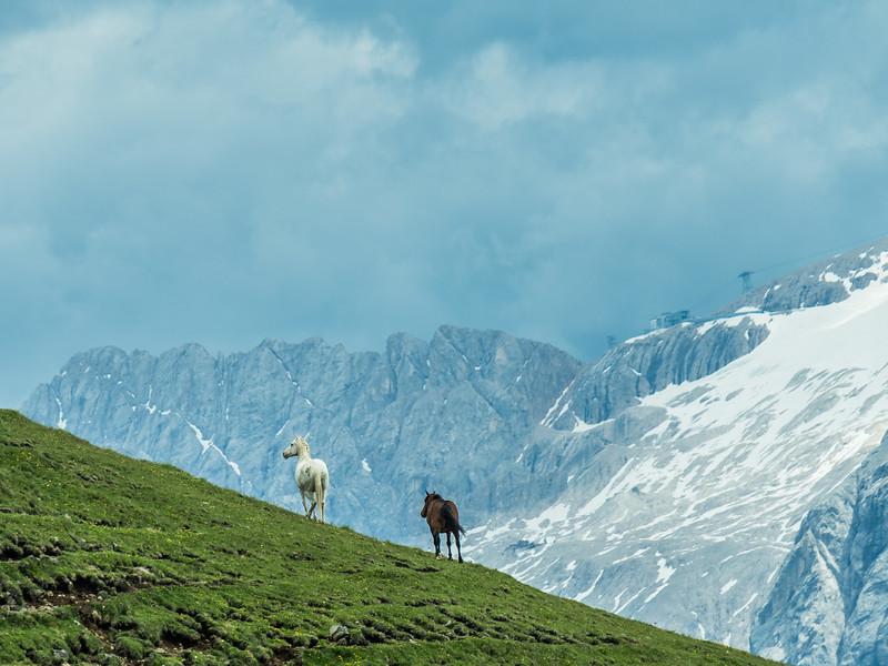 Horses on the Hillside, South Tyrol, Italy
