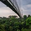 The Canopy Walk, Yasuni Rainforest, Ecuador