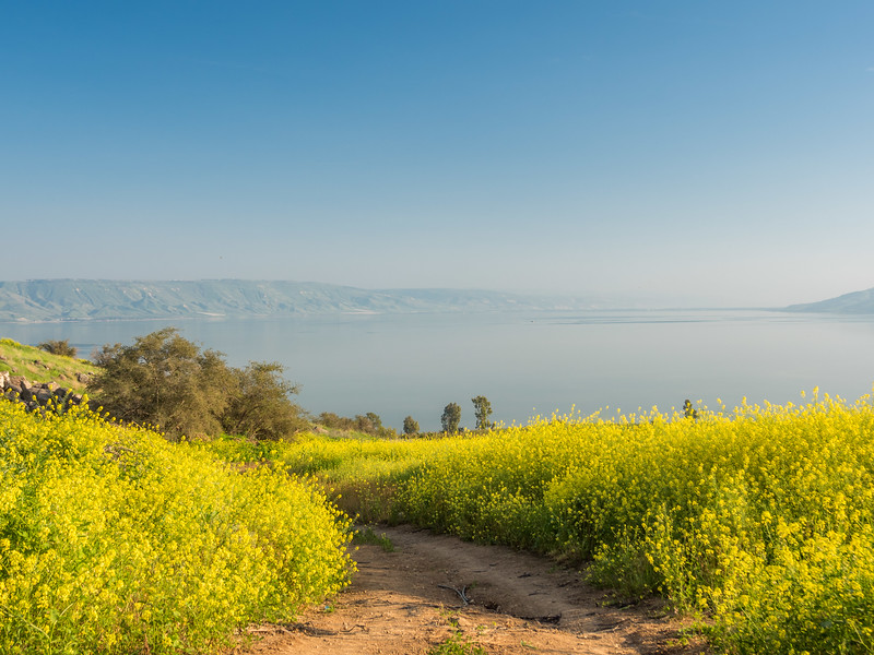 Wildflowers on the Mount of Beatitudes, Galilee, Israel