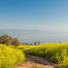 Wildflowers on the Mount of Beatitudes, Galilee, Israel