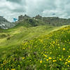 Wildflowers and the Rosszähne, South Tyrol, Italy