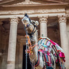 The Camel and the Treasury, Petra, Jordan