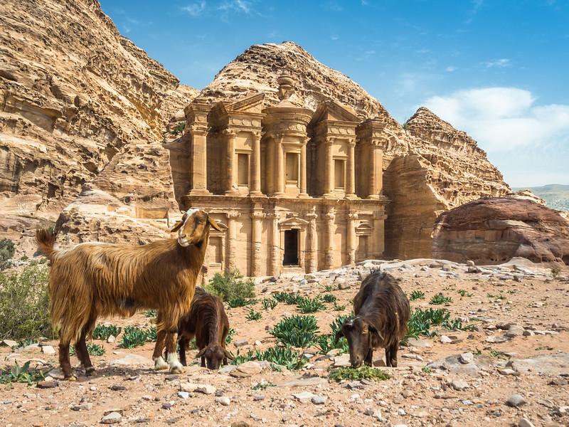 Goats and the Monastery, Petra, Jordan
