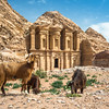 Goats and the Monastery, Petra, Jordan
