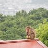 Meditating Macaque, Kyoto, Japan