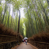 The Bamboo Forests of Arashiyama, Kyoto, Japan