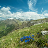 Wildflowers atop the Schlern, South Tyrol, Italy
