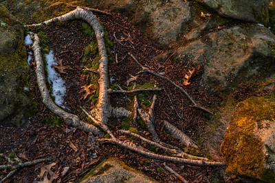 Landlines: Surface Roots | Cuyahoga Valley National Park