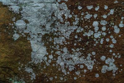 Landlines: Lichen, Brandywine Gorge | Cuyahoga Valley National Park