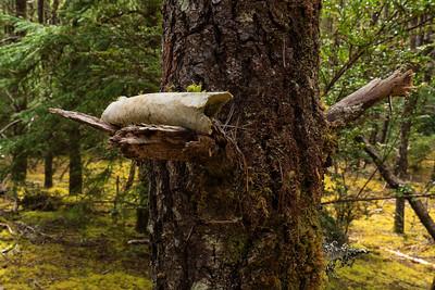 | Willapa National Wildlife Refuge