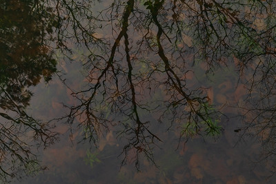 Waterportrait: Ouachita National Forest