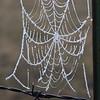 Frosty Spiderweb- Bowdoin NWR- Malta, MT