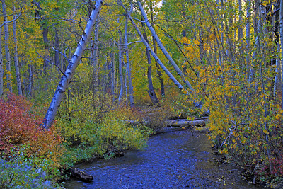 Lee Vining Canyon Colors.
