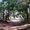 Sacred Walk<br /> Camera 5d Mk III