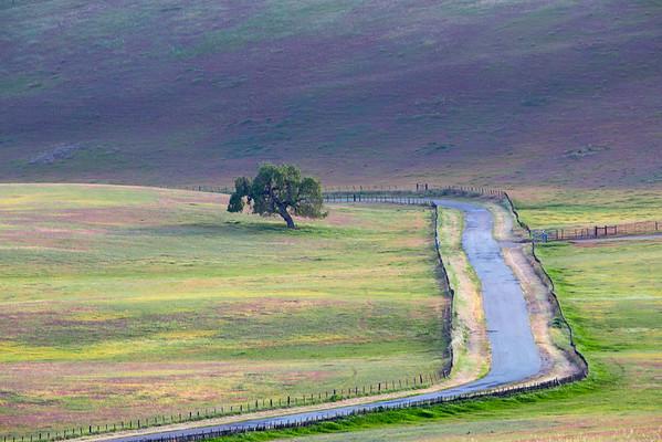 Owl Clover Fields