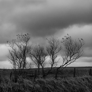 Windswept Trees and Turbines