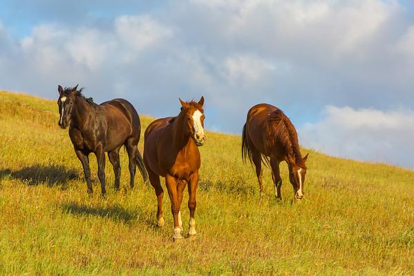Friendly Horses.