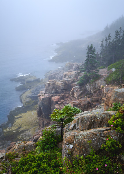 Otter Cliffs Trail