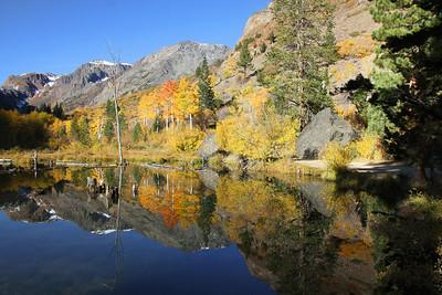 Beaver ponds.