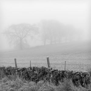 Dyke in the Fog