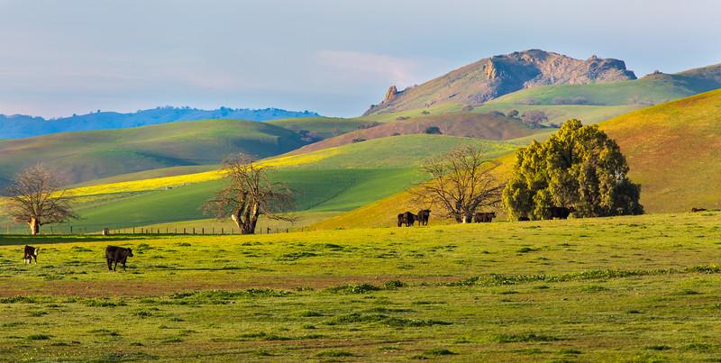 Farmland in the spring.