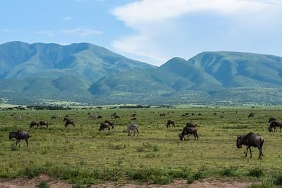 Vast Herds