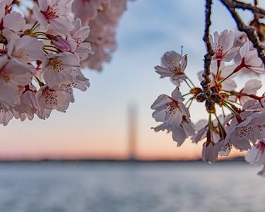 """""""Blossom Beauty"""""""