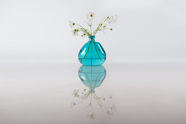 Aug  10 - Reflective Elegance<br /> <br /> I love the shape of this vase and have paired it with white Cosmos for this elegant still life
