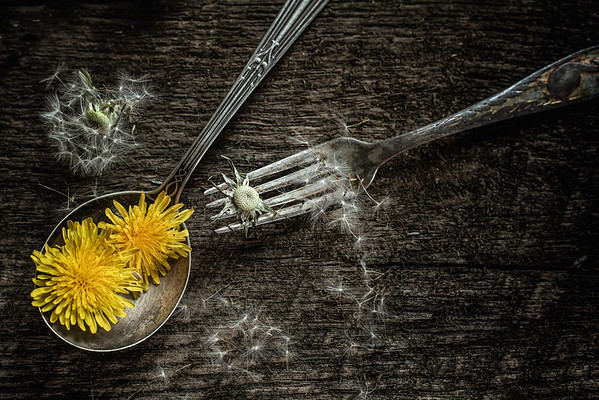April 30 - Dandelion Cycle of Life<br /> <br /> Spring is here and so are the dandelions.  They are often the first source of food for the bees :)